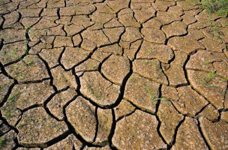 COP 21 : les cabinets de conseil et l'environnement