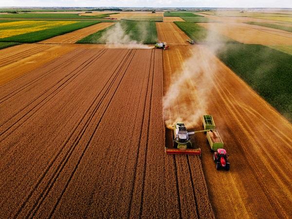 Dans les coopératives agricoles, du consulting au compte-gouttes